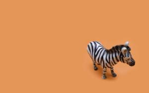 zebra-wallpaper-photography-art-design-97895