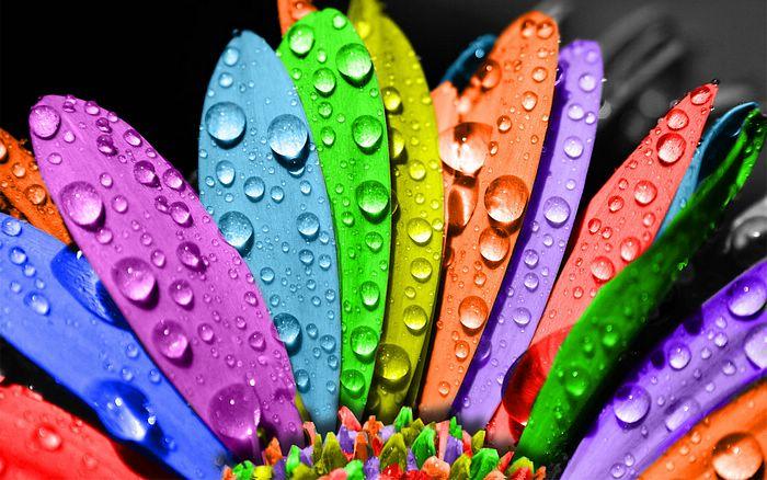 Colorful_Flower_Petals