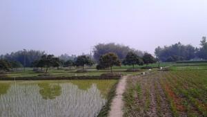 দিনাজপুরে ধান আর আম এরকম একসাথে ফলানোর নজিরও আছে